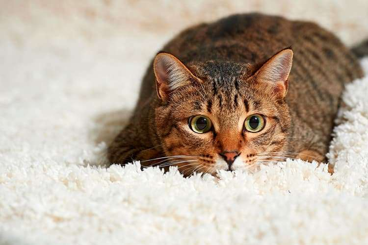 Акция: скидка на химчистку 10% владельцам кошек