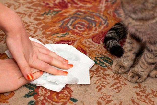 Как почистить ковролин от мочи